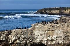 Pájaros de Santa Cruz imagen de archivo libre de regalías