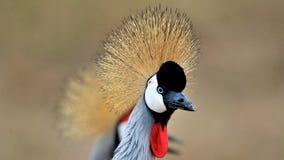 Pájaros de Tanzania Foto de archivo libre de regalías