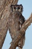 Pájaros de Tanzania imágenes de archivo libres de regalías