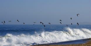 Pájaros de vuelo Imagen de archivo