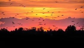 Pájaros de vuelo contra el cielo de la tarde Imagen de archivo