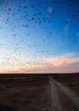 Pájaros de vuelo contra el cielo de la tarde Imágenes de archivo libres de regalías