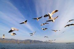 Pájaros de vuelo en cielo azul imagenes de archivo