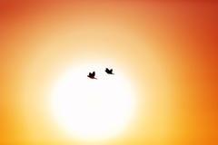 Pájaros de vuelo en el cielo fotografía de archivo libre de regalías