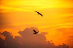 Pájaros de vuelo en el cielo en la salida del sol Cloudscape hermoso como vagos foto de archivo libre de regalías