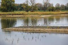 Pájaros de vuelo en el río Fotos de archivo libres de regalías