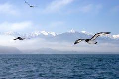 Pájaros de vuelo sobre el océano Foto de archivo libre de regalías