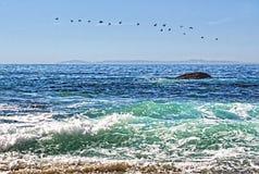 Pájaros de vuelo sobre el océano verde y azul cerca de una orilla rocosa Fotos de archivo libres de regalías
