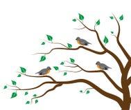Pájaros del árbol Imagen de archivo