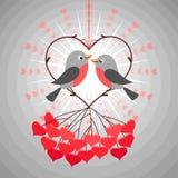 Pájaros del amor Fotografía de archivo libre de regalías