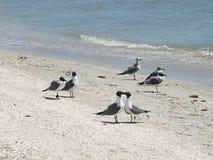 Pájaros del amor Foto de archivo