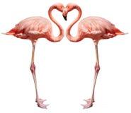 Pájaros del amor en blanco Fotos de archivo libres de regalías