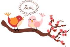 Pájaros del amor en Cherry Tree Foto de archivo