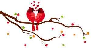 Pájaros del amor en la ramificación de árbol Foto de archivo libre de regalías