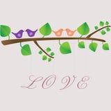 Pájaros del amor en un árbol Imágenes de archivo libres de regalías