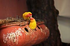 Pájaros del amor y un árbol imagen de archivo libre de regalías