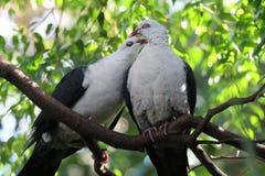 Pájaros del amor y un árbol Imagenes de archivo