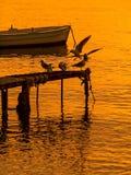 Pájaros del baile, y barco en la puesta del sol Imagenes de archivo