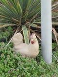 Pájaros del césped Foto de archivo libre de regalías