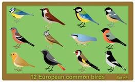 Pájaros del campo común del europeo ilustración del vector