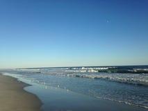 Pájaros del chorlito aflautado que alimentan desde ondas grandes en la playa de Lido, Long Island Fotos de archivo libres de regalías