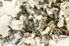 Pájaros del invierno Imagenes de archivo