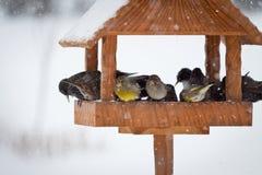 Animales del invierno Imágenes de archivo libres de regalías