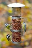 Pájaros del jardín en alimentador Fotografía de archivo