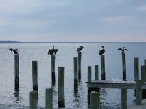 Pájaros del océano imagenes de archivo