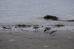 Pájaros del océano Fotografía de archivo libre de regalías
