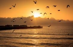 Pájaros del océano en el amanecer foto de archivo libre de regalías