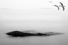 Pájaros del otoño Fotografía de archivo