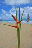 Pájaros del paraíso Imagen de archivo libre de regalías