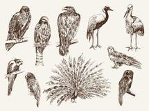 Pájaros del parque zoológico Foto de archivo