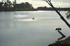 Pájaros del río de la mañana Fotografía de archivo libre de regalías