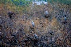 Pájaros del St Andrews State Park en el arbusto foto de archivo
