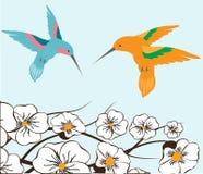 Pájaros del tarareo Imagen de archivo libre de regalías