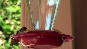 Pájaros del tarareo - cámara lenta metrajes