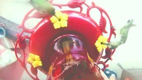 Pájaros del tarareo en un alimentador en HD almacen de video
