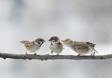 Pájaros divertidos que discuten en una rama en el parque Fotos de archivo