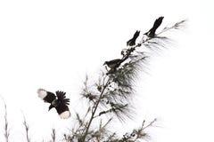 Pájaros en árbol Imágenes de archivo libres de regalías