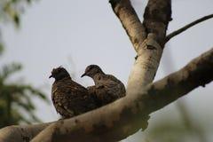 Pájaros en árbol Imagen de archivo