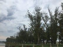 Pájaros en árbol Foto de archivo