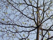 Pájaros en árbol Fotos de archivo