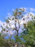 Pájaros en árbol Fotos de archivo libres de regalías