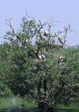 Pájaros en árbol Imagenes de archivo