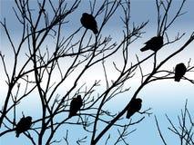 Pájaros en árbol Fotografía de archivo