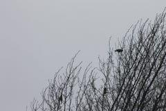 Pájaros en árbol Fotografía de archivo libre de regalías