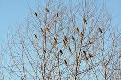 Pájaros en árbol Foto de archivo libre de regalías