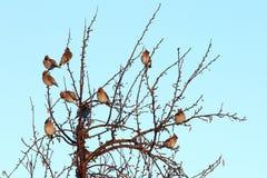 Pájaros en árbol desnudo Fotos de archivo